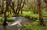 Fine Art Print – polylepis Forest und Stream, El Angel Reserve, Anden Berge, Ecuador von Bentley Global Arts Gruppe, Papier, multi, 15 x 10