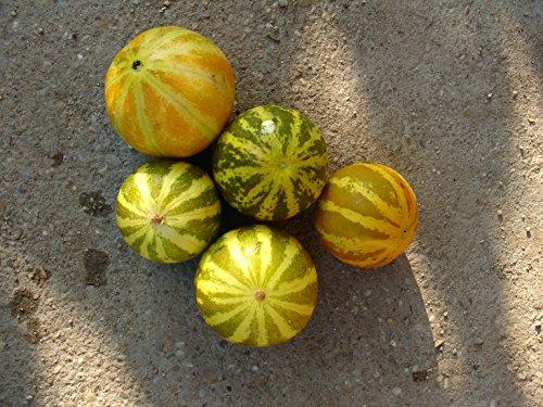 sun melon, extra sweet, high yield, 90 days, 20