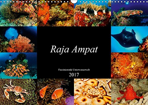 Raja Ampat - Faszinierende Unterwasserwelt (Wandkalender 2017 DIN A3 quer): Tauchen Sie ein in die faszinierende Unterwasserwelt von Raja Ampat, Papua ... (Monatskalender, 14 Seiten ) (CALVENDO Natur)