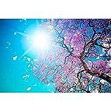 Merlin65Scott Baum Sonne Blau Lila Krone Frühjahr blühenden von Unten Licht Nature Poster Kunstdruck auf Leinwand