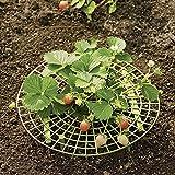 Shoppy Star Handliche langlebige Pflanzenunterstützung Multifunktion Erdbeerpflanzen Ranke unterstützt Garten Gewächshaus Gemüse Unterstützung: S