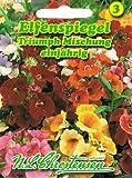 Elfenspiegel 'Triumph-Mischung', einjährig, farbenprächtige Beet- und Gruppenpflanze ' Nemesia strumosa'