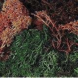 Scenic Lichen, Autumn Mixture , Model Railway / Wargaming,Javis
