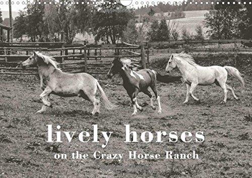 lively horses on the Crazy Horse Ranch (Wall Calendar 2017 DIN A3 Landscape) (Calvendo Animals) Crazy Horse Ranch