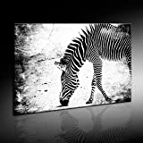Banksy Zebra Street Art Graffiti Leinwand Bild 101x71cm von artfacktory24.com fertig auf Keilrahmen - Kunstdrucke, Leinwandbilder, Wandbilder, Poster, Gemälde, Pop Art Deko Kunst Bilder