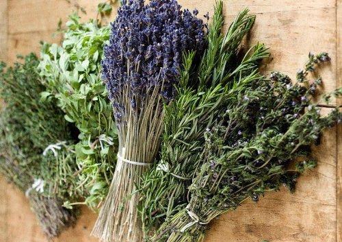 Kräuter der Provence Mischung - 200 Samen - Zitronenverbene, Lavendel Und Thymian