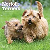 Norfolk Terriers 2019 - 18-Monatskalender mit freier DogDays-App: Original BrownTrout-Kalender [Mehrsprachig] [Kalender]