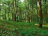 Artland Poster oder Leinwand-Bild gespannt auf Keilrahmen mit Motiv Inga Nielsen Panorama von einem grünen Sommerwald Landschaften Wald Fotografie Grün A7QY