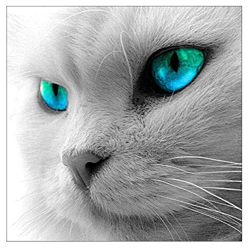 Mikolot 5d aux yeux bleus Cat Diamant Broderie Peinture DIY point de croix Home Decor 250 x 9.84in