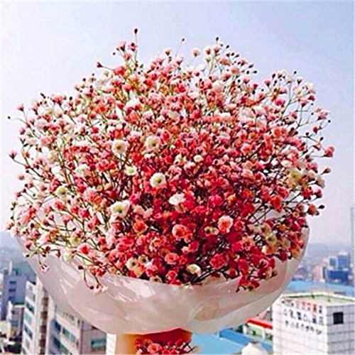 Semences de gypsophile Étoiles colorées Usine Cône Fleur de pierre Printemps Plantation en pot Plantes Fleurs Quatre saisons Fleurs d'intérieur