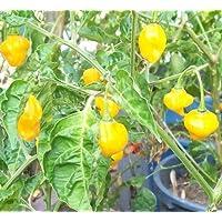 Habanero Scotch Bonnet giallo - frutti di
