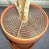 Safetots Hauspflanzen-Schutz Braun