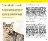 Katzen Clicker-Box gelb 12 x 3,5 cm (GU Tier-Box) - 9