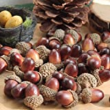 50 Pcs Christmas Decorative Fake Mini Acorn Oak Nut Artificial Fruits Ornaments Decor