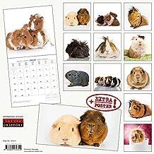 Meerschweinchen 2018: Kalender 2018 (Artwork Edition)