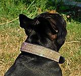 Halsband Funky Lederhalsband Glitzer Art Strass Breit M L XL Glitzerhalsband Tysons (M, Schwarz Goldfarben)