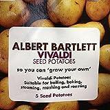 Seed Potato Albert Bartlett Vivaldi Second Early Taster Pack