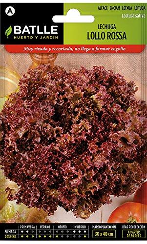 Batlle Gemüsesamen – Salat Lollo Rossa (4800 Samen)