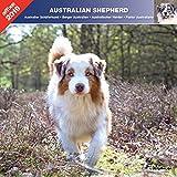 Australian Shepherd 2019–Kalender AFFIX (linguistik) (Australian Shepherd)
