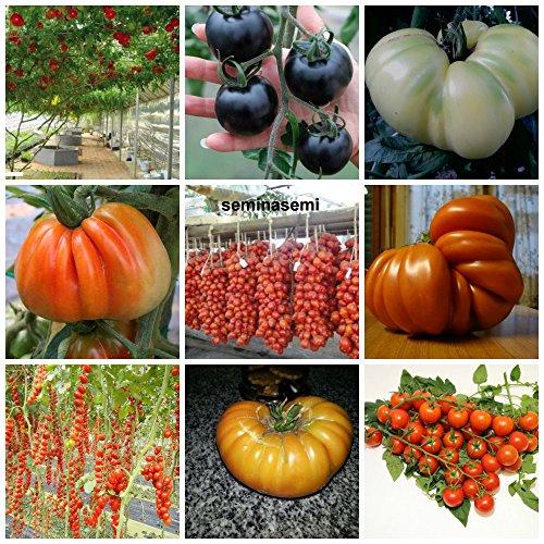 90 graines de tomate dans 9 variétés de substances nutritives rares et riche, COLLECTION 3: 10 POMODORO GIGANTE ITALIANO, 10 CILIEGINO NERO, 10 GIGANTE BIANCO,10 CUOR DI BUE, 10 PIENNELO DEL VESUVIO,10 TOMATO GIANT,10 DATTERINO,10 BIG RAINBOW,10 CERISE