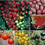 Adolenb Seeds House- 50pcs Tomate Cerise Super Sucré Fruits Bio Tomate Cerise Sweet Sweet Mix Home Garden