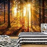 murando - Fototapete Wald 3D 350x256 cm - Vlies Tapete - Moderne Wanddeko - Design Tapete - Wandtapete - Wand Dekoration - Wald Landschaft Natur Sonne Grün Bäume Sonnenuntergang c-B-0162-a-b