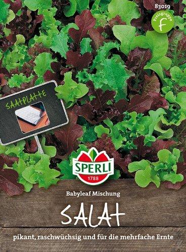 Salatsamen – Mini-Salatmischung Babyleaf von Sperli-Samen