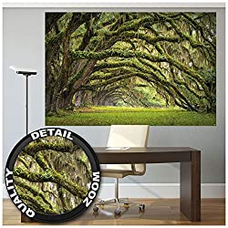 GREAT ART XXL Poster - Eichen Allee - Wandbild Dekoration Wald Natur Landschaft Sommer Forest Moos Mystik Oak Quercus Märchenwald Park Äste Foto-Tapete Wandtapete Fotoposter (140 x 100 cm)