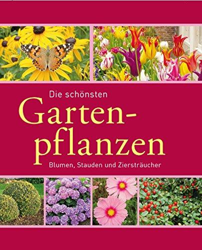 die-schonsten-gartenpflanzen-blumen-stauden-und-zierstraucher-gartenpraxis-und-gestaltung
