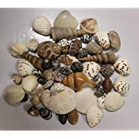 Multi Natural SEA Shell_1 KG