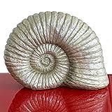 Exner Ammonit Hilda Polyresin, silber, H ca. 24 cm