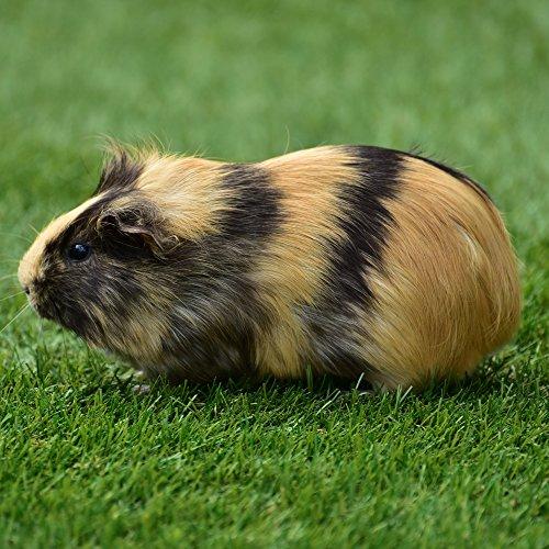 Ornigold Mehlwürmer getrocknet 500g Premiumqualität Insekten Wildvogelfutter – Ganzjahresfutter für Wildvögel, Hühner, Hamster, Reptilien und Koi - 4