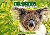 Bärig: Koalas in Australien - Edition lustige Tiere (Wandkalender 2018 DIN A3 quer): Koalas: Lebende Teddybären (Monatskalender, 14 Seiten ) (CALVENDO Tiere) [Kalender] [Apr 01, 2017] CALVENDO, k.A.