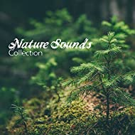 Nature Sounds Collection – Music for Relaxation, Sleep, Meditation, Water Sounds, Waves, Birds, New Age to Rest