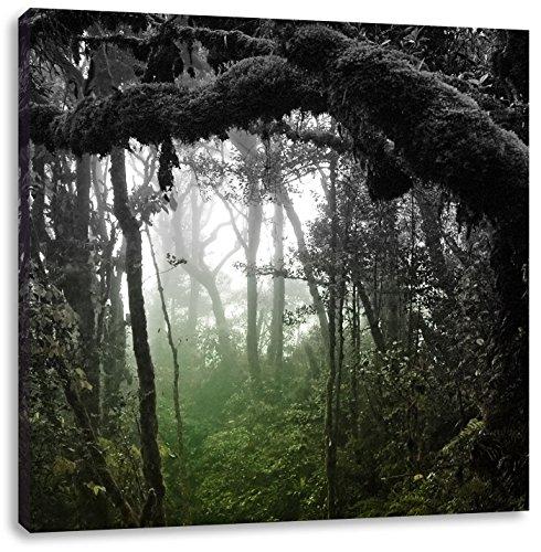 Pracht Gerahmt (Regenwald in seiner ganzen Pracht schwarz/weiß, Format: 60x60 auf Leinwand, XXL riesige Bilder fertig gerahmt mit Keilrahmen, Kunstdruck auf Wandbild mit Rahmen, günstiger als Gemälde oder Ölbild, kein Poster oder Plakat)