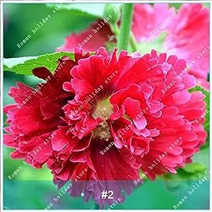 ZLKING 100 Pz rari semi rosso Hibiscus rosa bonsai del fiore naturale in rapida crescita esotiche piante da fiore Pot Stand 2