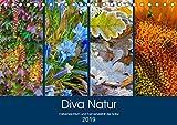 Diva Natur (Tischkalender 2019 DIN A5 quer): Farbenreichtum und Formenvielfalt in der Natur (Monatskalender, 14 Seiten ) (CALVENDO Natur)