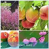 ZLKING 2ST Pfirsich Samen Obst Bonsai Pflanze Zwergobstbaum-Samen Exotische Pflanzenarten Beliebte mehrjährigen Pflanzen Hausgarten