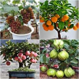 Catterpillar Farm Dwarf Home Garden Fruit Seeds Combo-Apple Grapes Guava Orange 5 Seeds Each