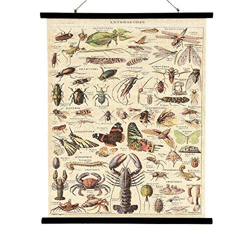 Schulwandkarte Nostagie Wandbild Biologie Gliederfüßer Vintage Leinwand 80x100cm