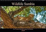 Wildlife Sambia (Wandkalender 2019 DIN A2 quer): Sambia mit seinen wunderschönen und tierreichen Nationalparks - ein Land für Natur- und Tierliebhaber. (Monatskalender, 14 Seiten ) (CALVENDO Tiere) - Photo4emotion.com