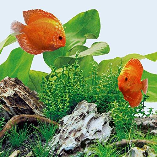 JUWEL Aquarium 86805