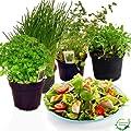 Salatkräuter-Set von Weselerkräuterparadies - Du und dein Garten