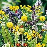 Xianjia Garten - Wildblumen Samen Naschkatzen Mischung Blumensamen bienen pflegeleicht Sommerblume Saatgut für Garten Balkon (100)