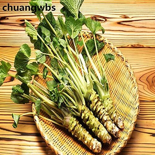 Pinkdose 100 stücke Wasabi pflanzen Japanische Meerrettich Gemüse Bonsai Pflanze DIY Hausgarten Pflanzen