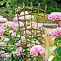 Gärtner Pötschke Rankgitter Landgarten, groß von Gärtner Pötschke auf Du und dein Garten