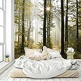 murimage Papier Peint Forêt 274 x 254 cm Photo Mural Bois Arbres lumière du Soleil Salle de séjour Wallpaper Colle Inclus