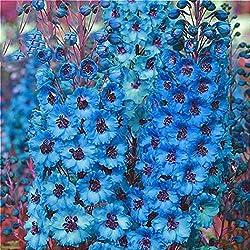 Tomasa 100Stk Hollyhock Heavy Flap Samen,Entzückende Blumen wohlriechende Blüte medizinische Wert Hollyhock schwere Klappen Samen (Blau)