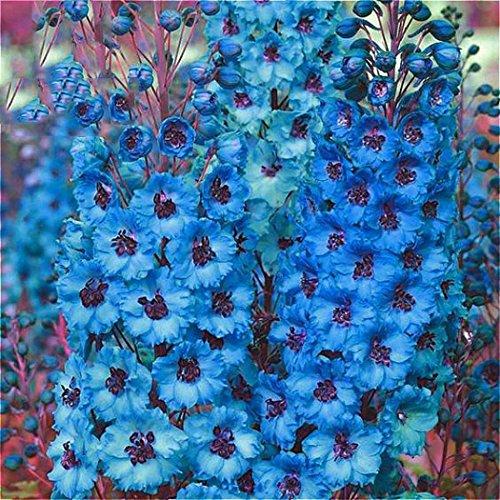 Blumen Medizinischen (Tomasa 100Stk Hollyhock Heavy Flap Samen,Entzückende Blumen wohlriechende Blüte medizinische Wert Hollyhock schwere Klappen Samen (Blau))