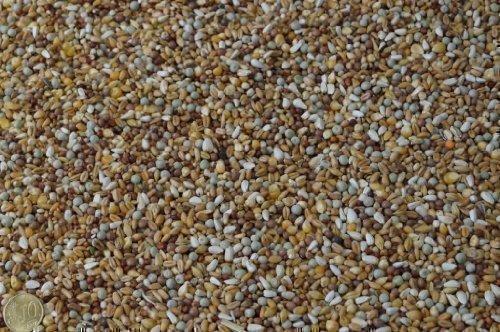 Das Heimtier Center RUKU Taubenfutter Rasse POP 25Kg mit Kleinmais, für kleine und große Rassen -